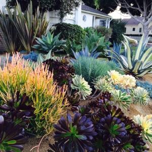 dlf_succulents