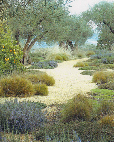 mediterranean meadow.small