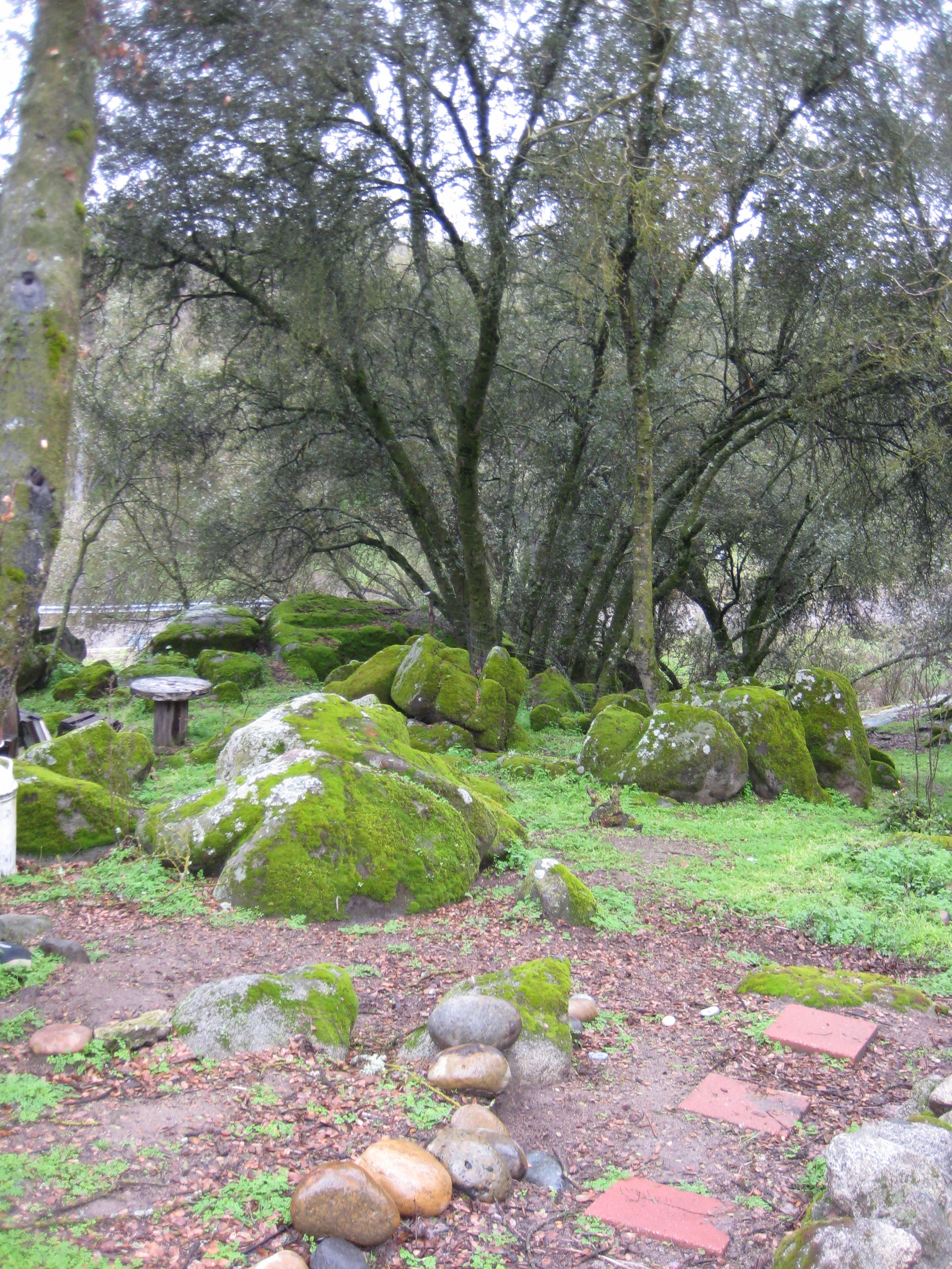 moss covered everything