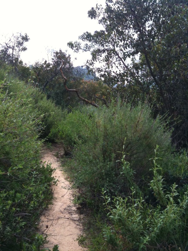 a spring hike in Topanga reminded me that Mother Nature is the very best at design