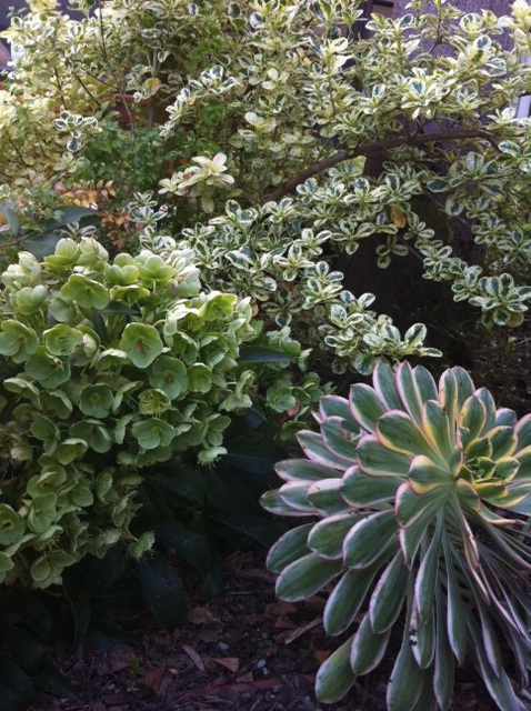 lighten up with variegated foliage